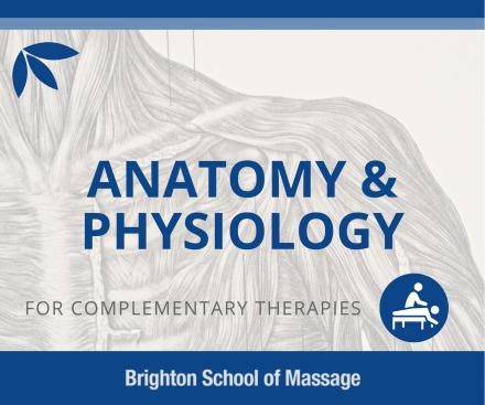 anatomy physiology
